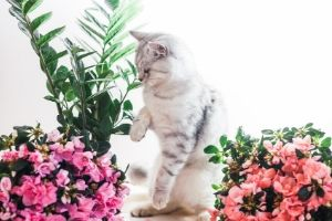 azaleas are poisonous to cats