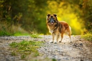 health benefits of mutts