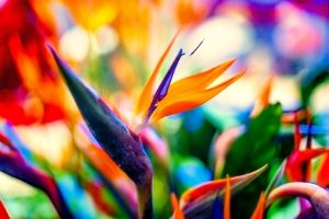 birds of paradise are poisonous to cats