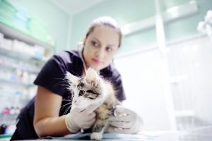 why cats need bloodwork