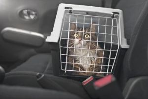 cat carriers for vet transport