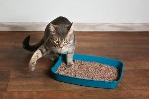 cats going outside the litter box
