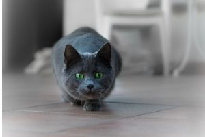 cat hunting and exercise