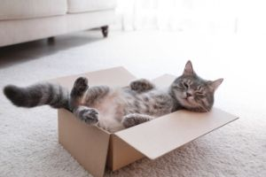 cats play in boxes style=