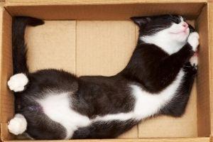 cats if it fits I sits