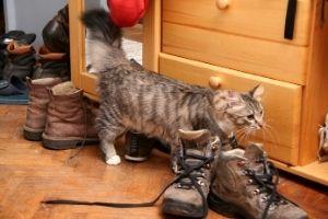 cats urine marking