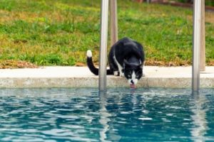 keep pets safe around water