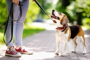 how to choose dog collars