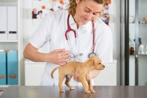 core and noncore puppy vaccines