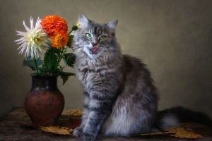 Dahlias are poisonous to cats