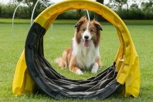dog agility kit for holidays
