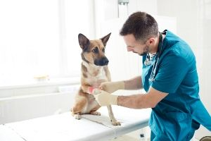 why dogs need bloodwork