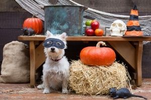 make sure dogs have collars on Halloween