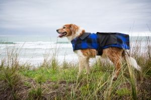 gear for hiking with dogs
