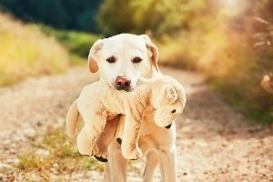 dog plush toy for holidays