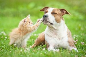 treating fleas in dogs and cats