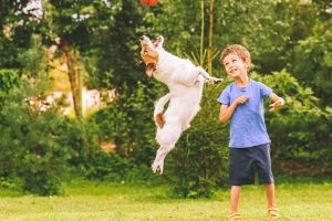 exercise helps separation anxiety in dogs