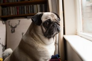 treatments for dog separation anxiety