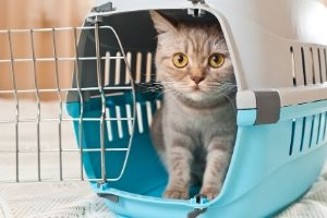 set humane trap for missing cats