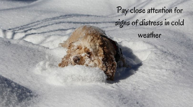 A dog laying in the snow
