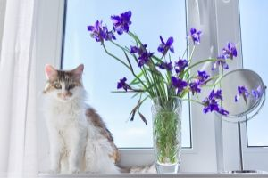 Irises are poisonous to cats
