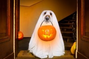 keep pets indoor on Halloween