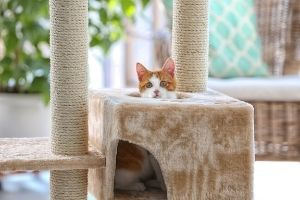 kitten in a cat tree
