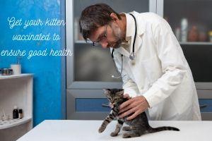 kitten vaccinations