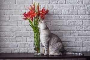 lilies are poisonous to cats