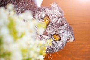 Lily of the valley plants are poisonous to cats
