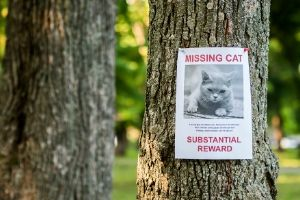 use flyers to find missing cats