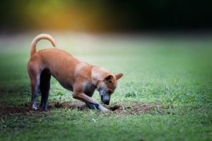 mutts fewer hunting instincts