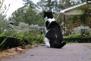 caring for neighborhood cats
