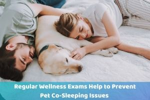 pet wellness exams help keep you safe when sleeping with pets