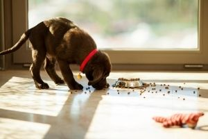 puppy diet for potty training