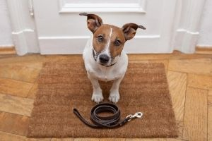 how to choose and size dog leashes