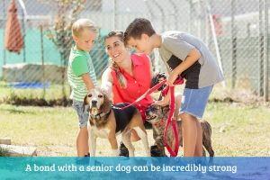 senior shelter dogs can bond