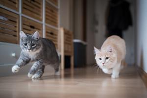 cat companionship