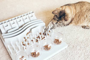 hone your cat's hunting instincts