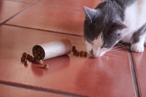 cat mealtime enrichment