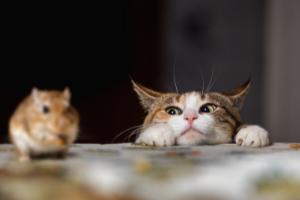 nine cat lives myth