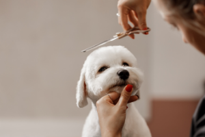 dogs don't need summer haircuts