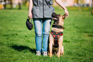 dog training look command