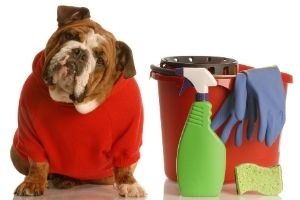 household cleaners toxic to pets
