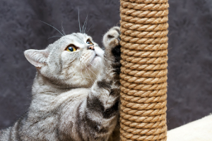 cats need scratching posts