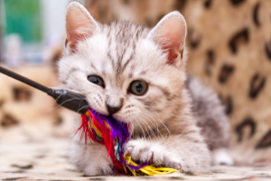 indoor cat enrichment