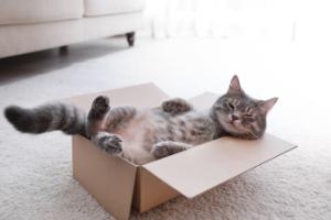 pros of indoor cats