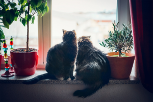 let cats look outside