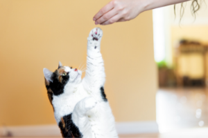 cats can be trained