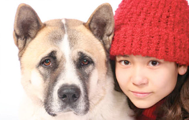 Akita Dog Breed Info